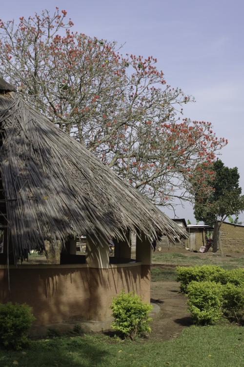 Visite des marais de Mabamba