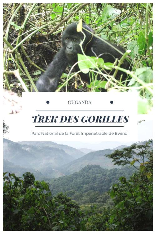 Tout savoir sur le trekking des gorilles dans la forêt de Bwindi en Ouganda