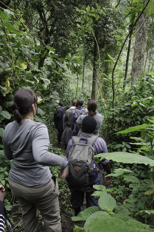 Trek des Gorilles