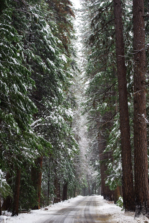 Yosemite National Park sous la neige