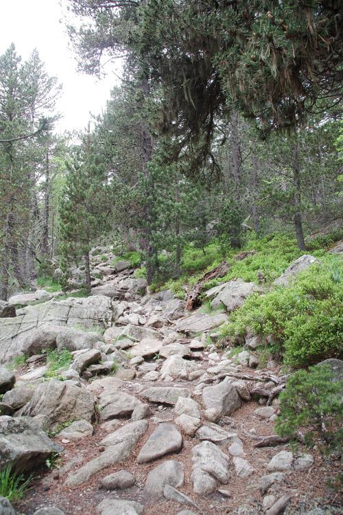 Sentier de randonnées aux laquettes de Néouvielle