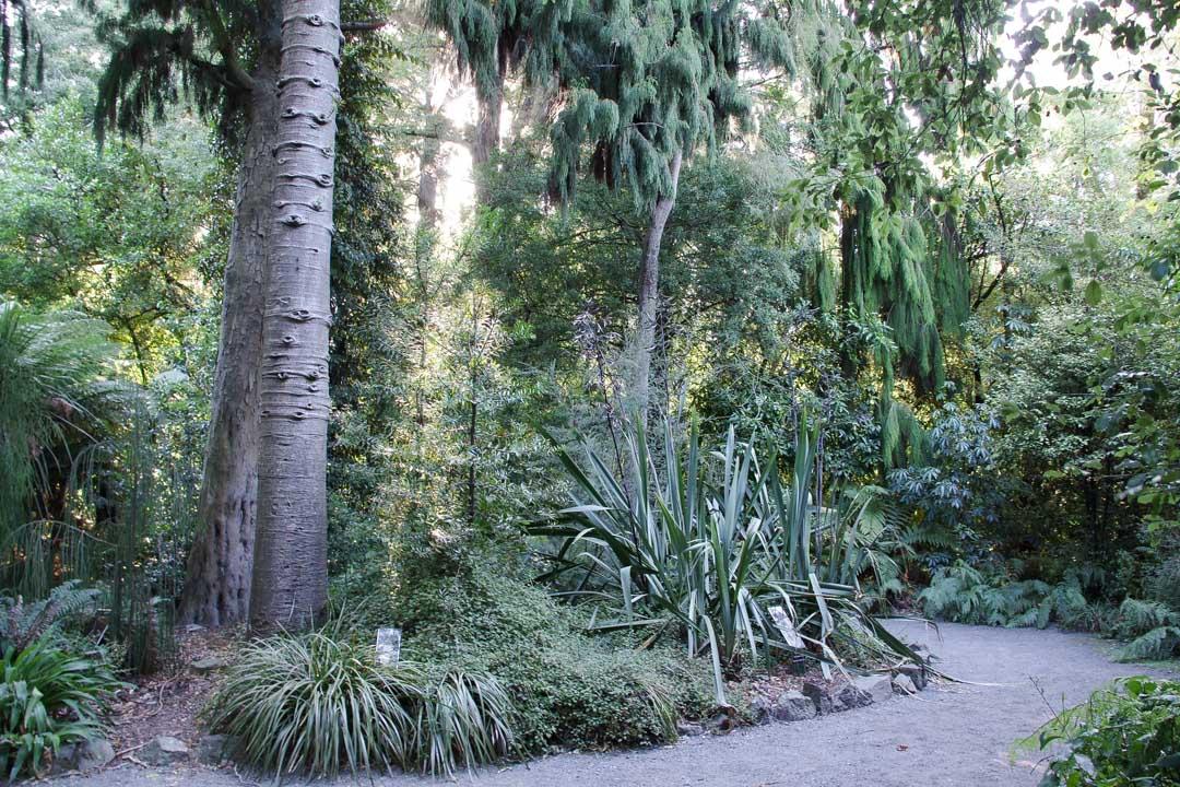 Jardin Botanique de Christchurch
