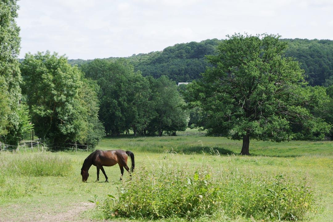 Cheval broutant à Petit-Jouy-les-Loges