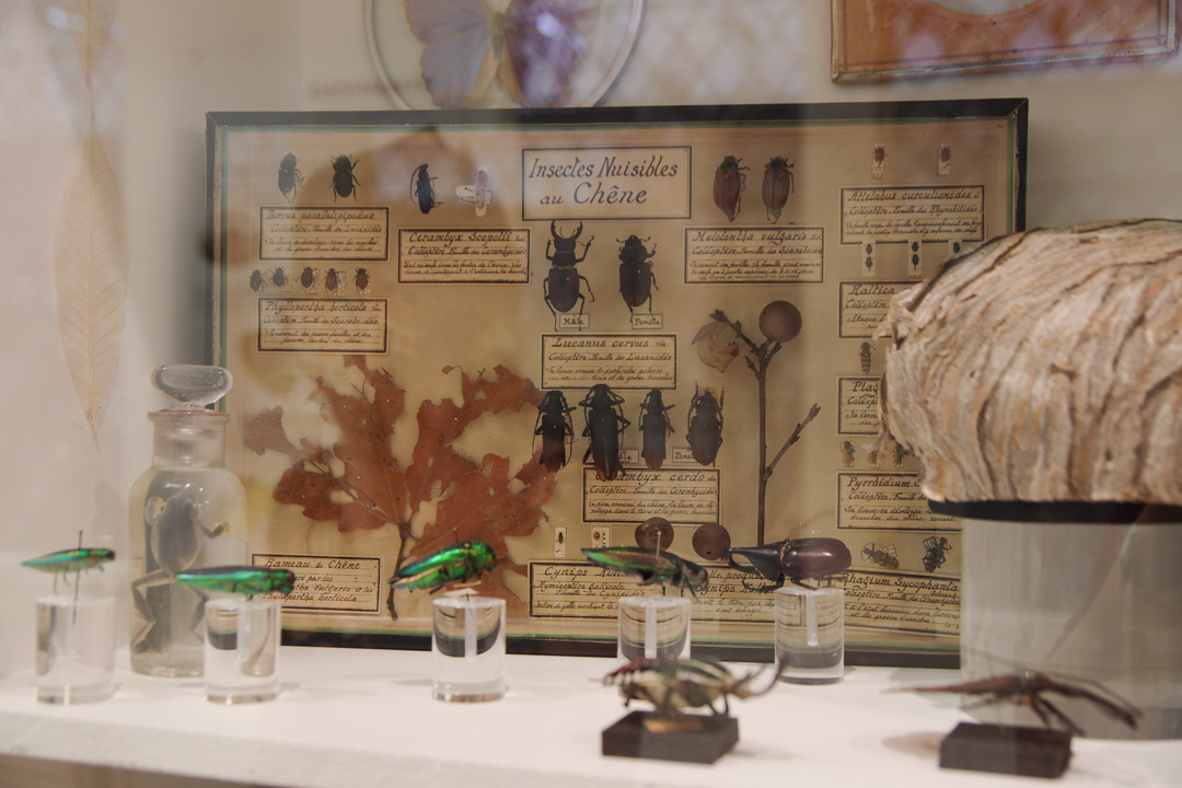 Musée des papillons - Saint-Quentin
