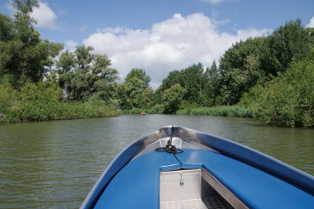 balade en bateau dans le biesbosch