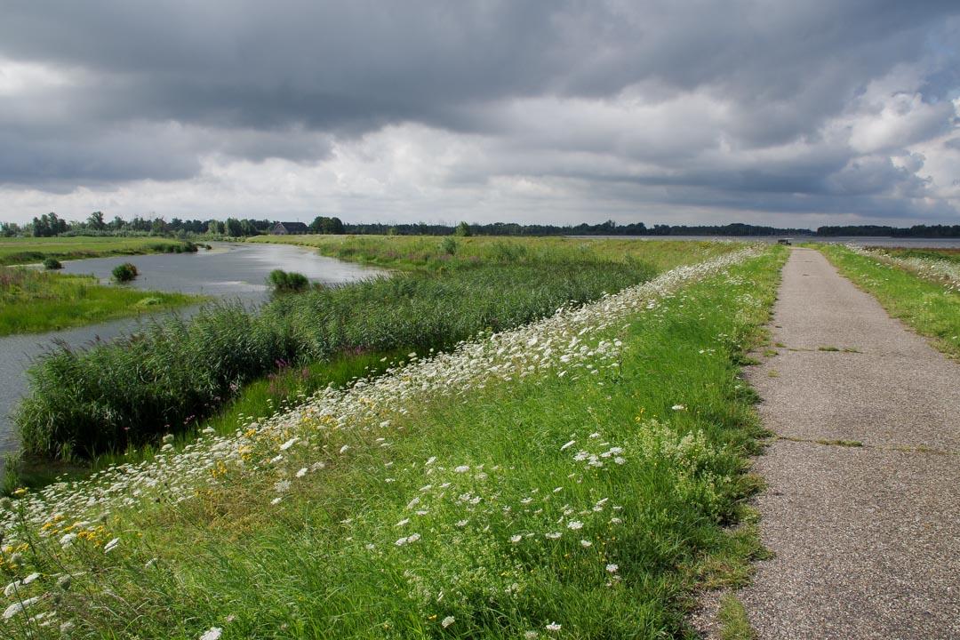 Piste Cyclable dans le Biesbosch