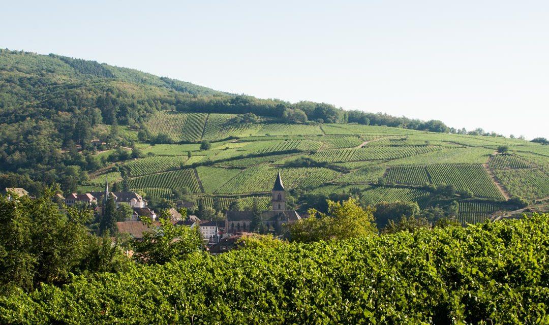3 jours à vélo sur la route des vins d'alsace