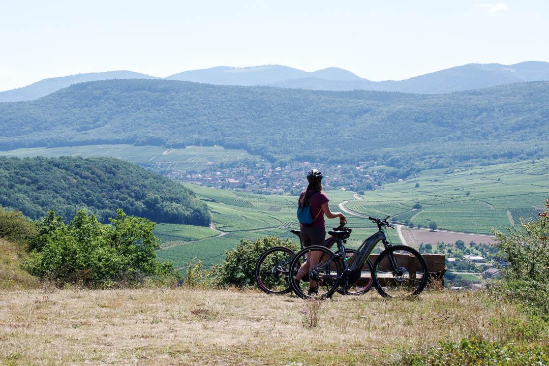 Panorama sur les vignobles d'Alsace