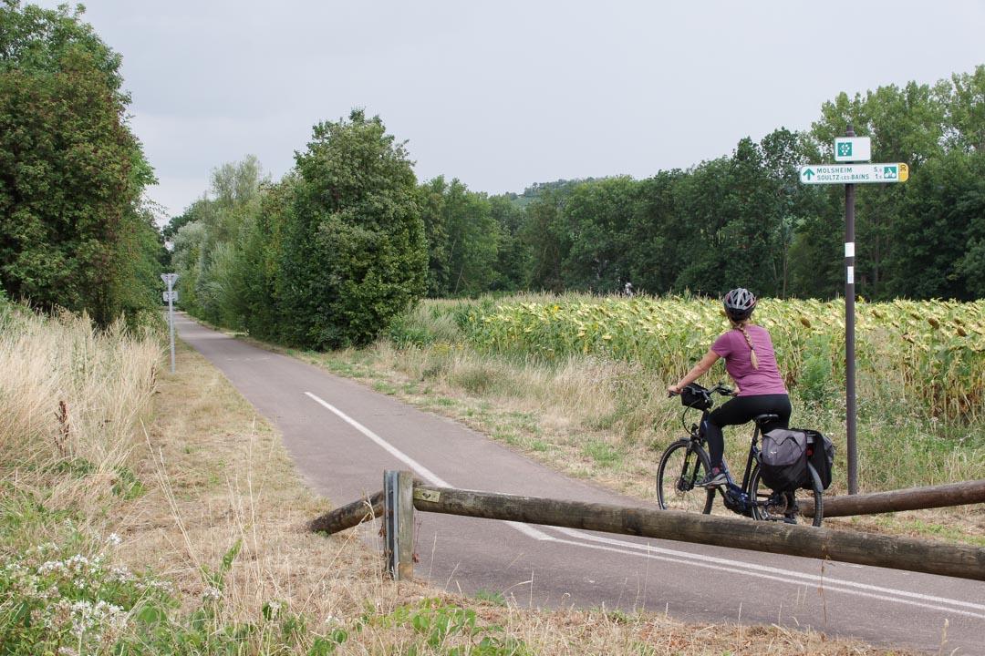 la véloroute des vignobles d'Alsace
