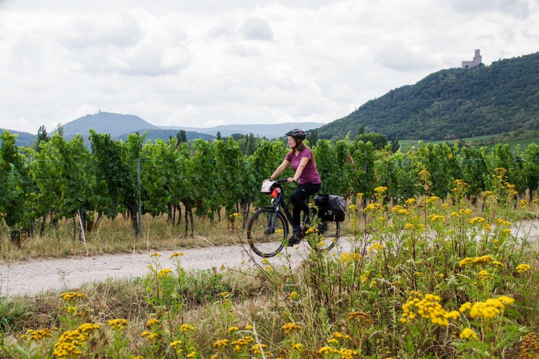 sur la véloroute du vignoble d'Alsace