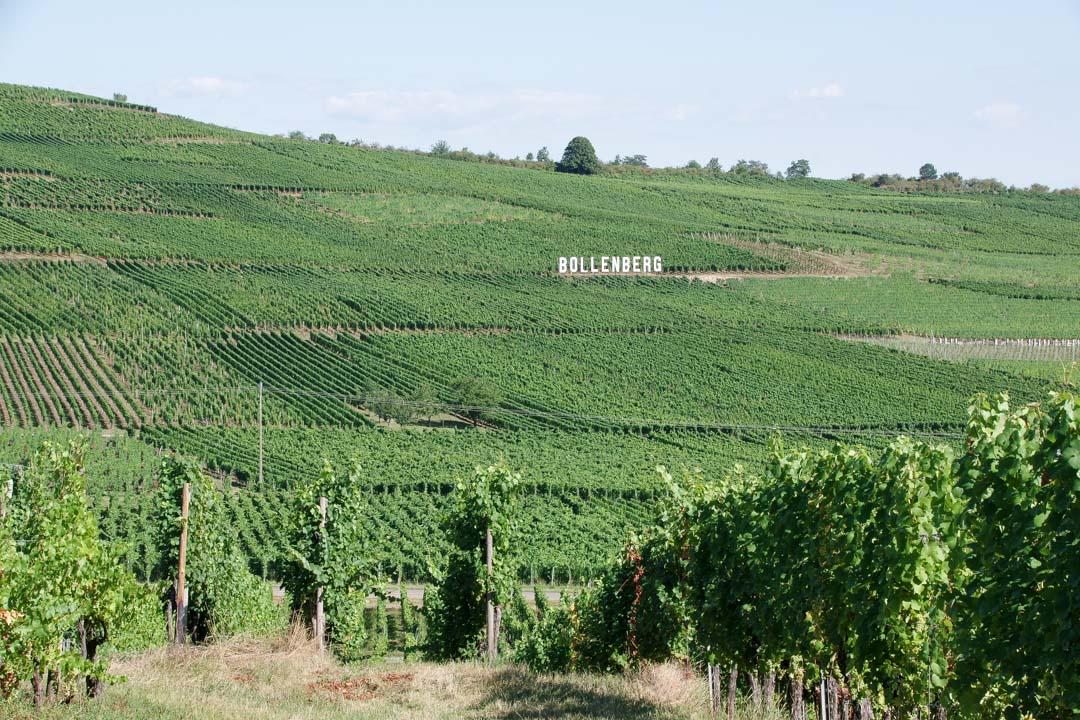 vignoble de Bollenberg