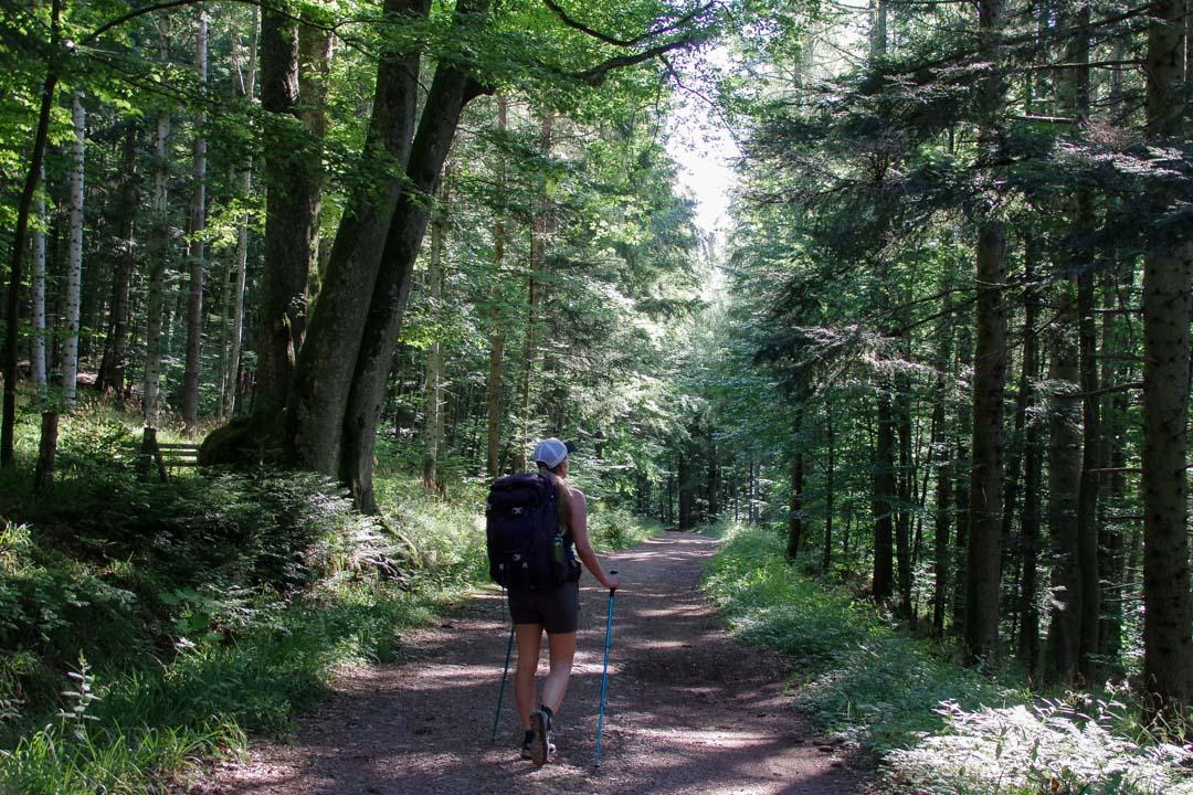randonnée sur le GR5 dans le Massif des Vosges