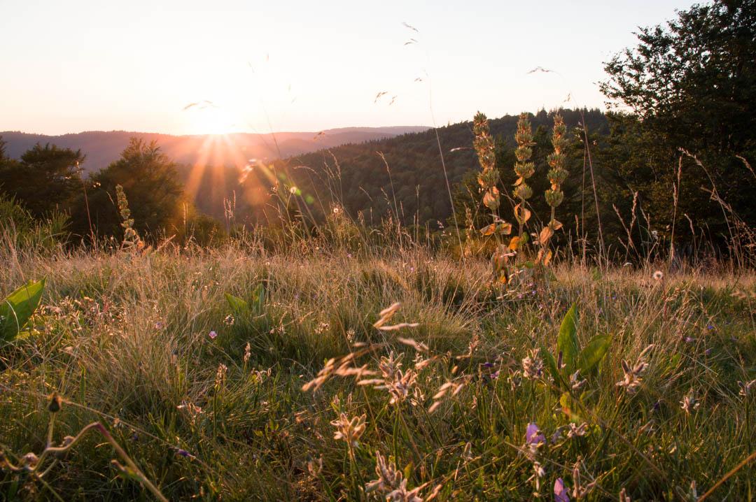 coucher de soleil sur les gentianes