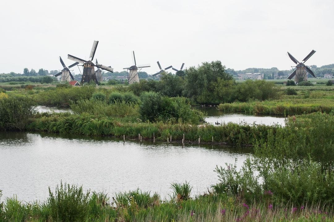 Panorama sur les moulins de Kinderdijk