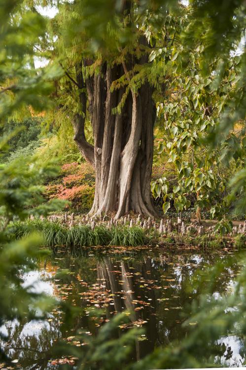 Arboretum de la vallée aux loups à chatenay-Malabry