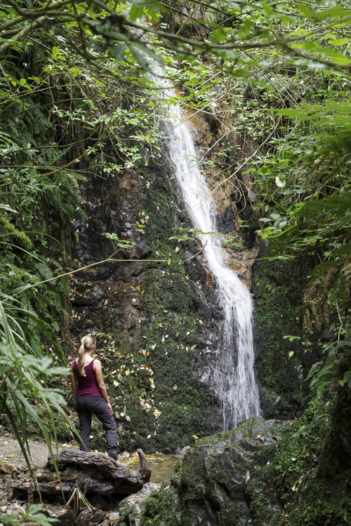 cascade Peel Forest