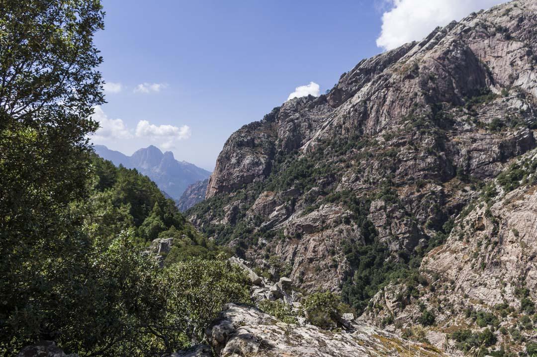 forêt d'Aïtone - Corse