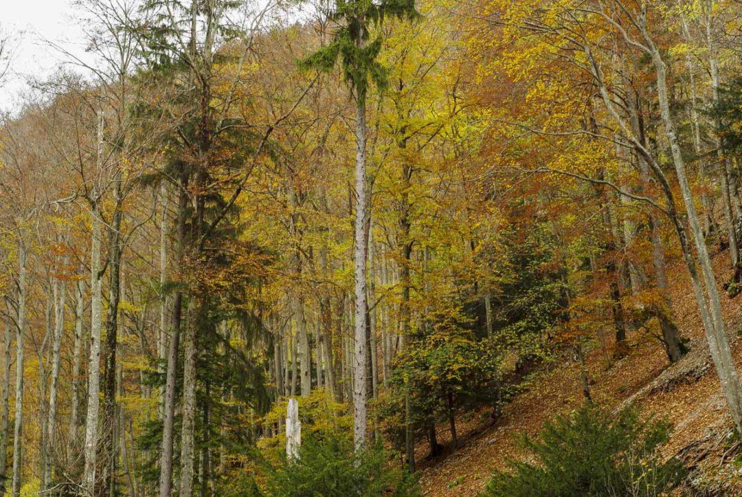 la foret du jura suisse en automne