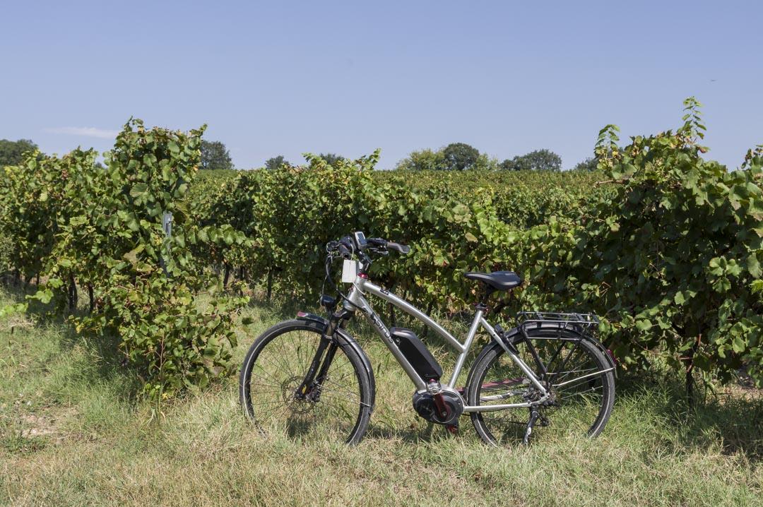 balade à vélo dans les vignes