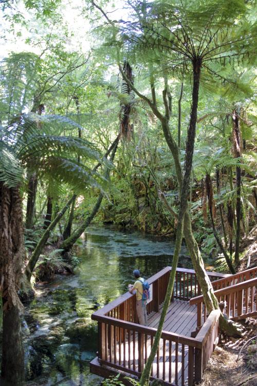 Hamurana Springs en Nouvelle-Zélande