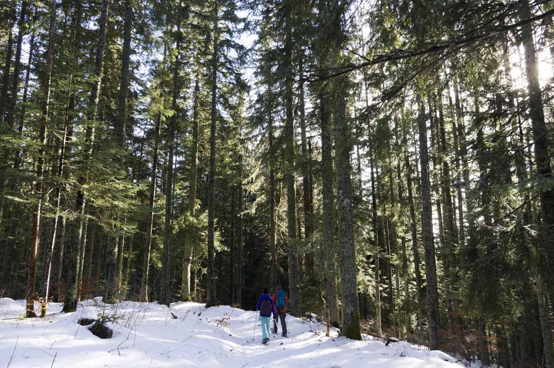 randonnée en raquettes dans le bois du Claret entre Autrans et Méaudre