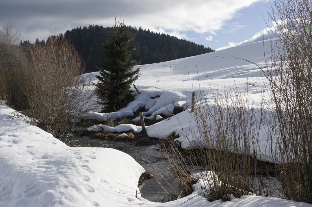 ruisseau dans le Vercors