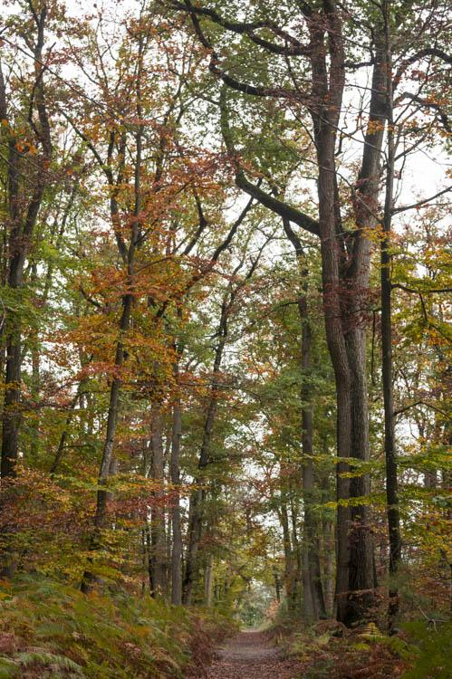 randonner dans la forêt de fontainebleau en automne