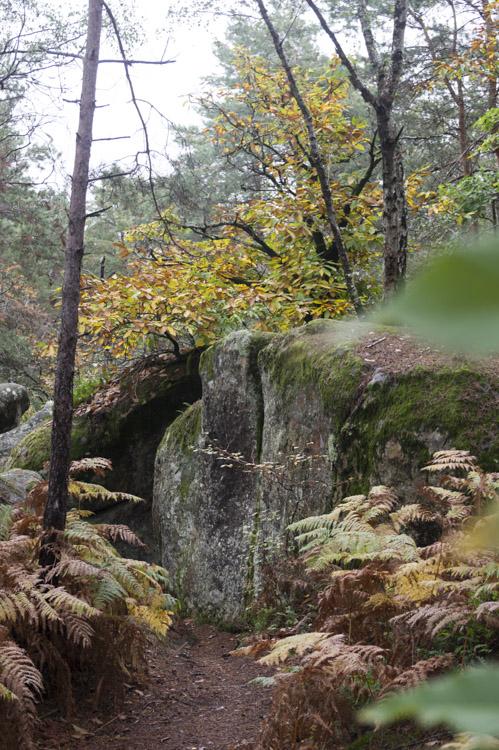 les rochers dans la forêtde Fontainebleau