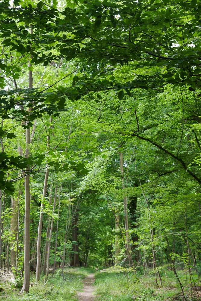 la forêt de Saint Germain dans les Yvelines