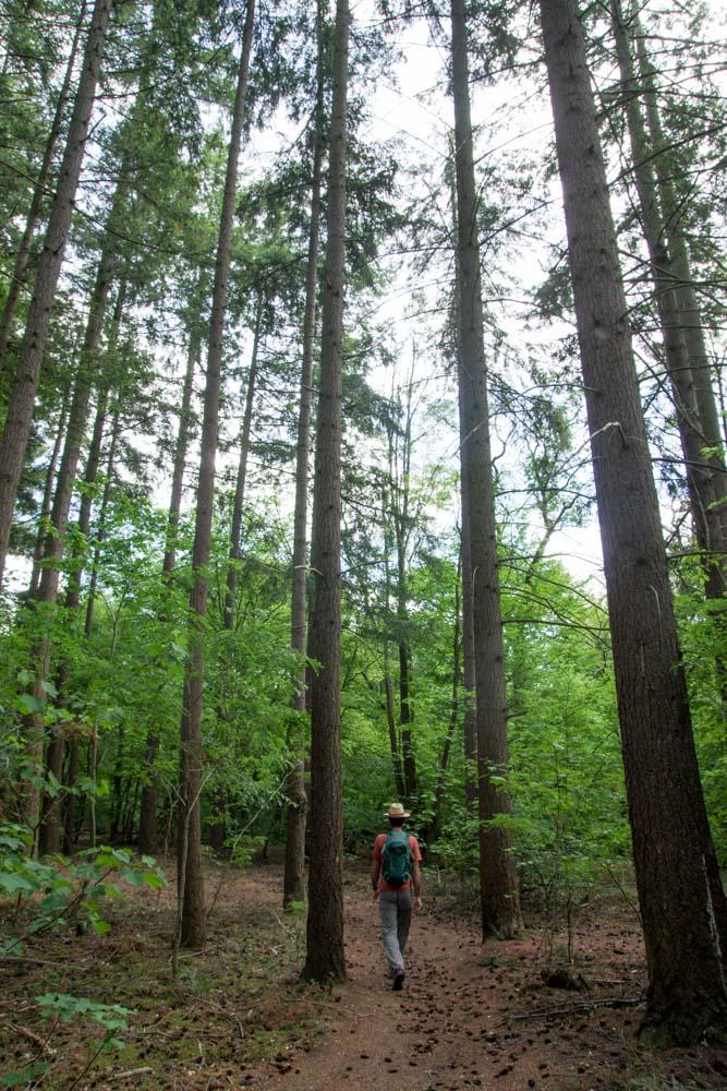 randonnée dans la forêt de Saint Germain