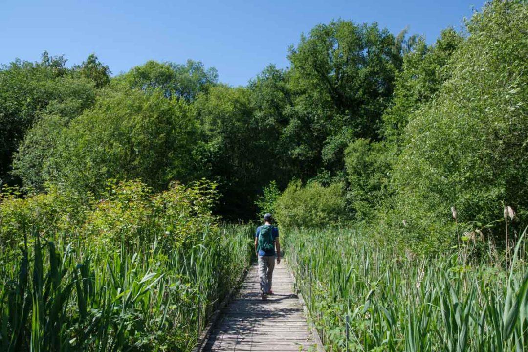 randonnée dans la roselière de Maincourt