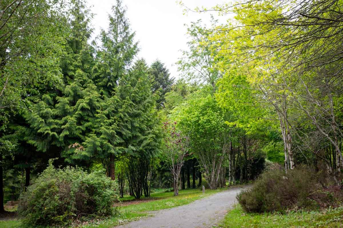l'Arboreteum du Bois du Tay