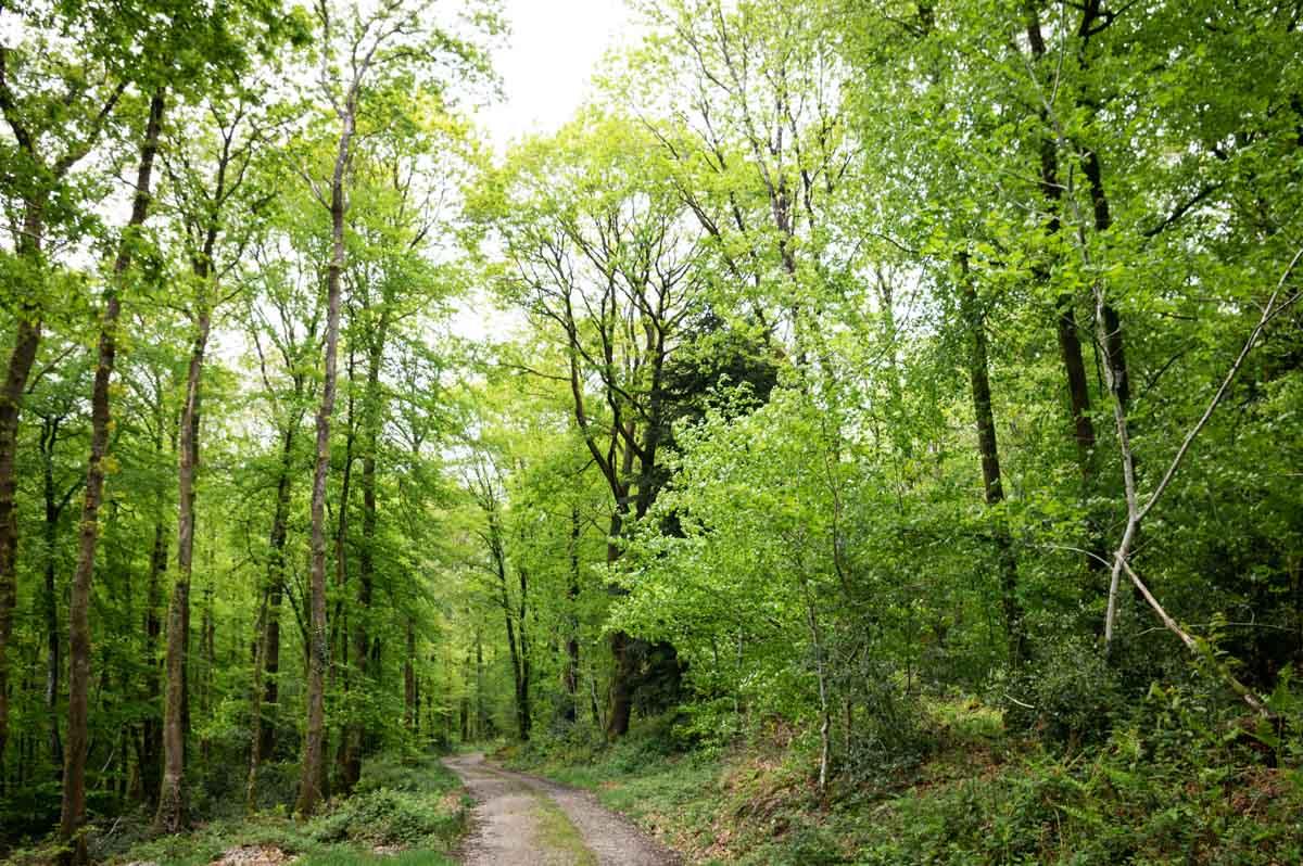 randonnée dans le Bois du Tay