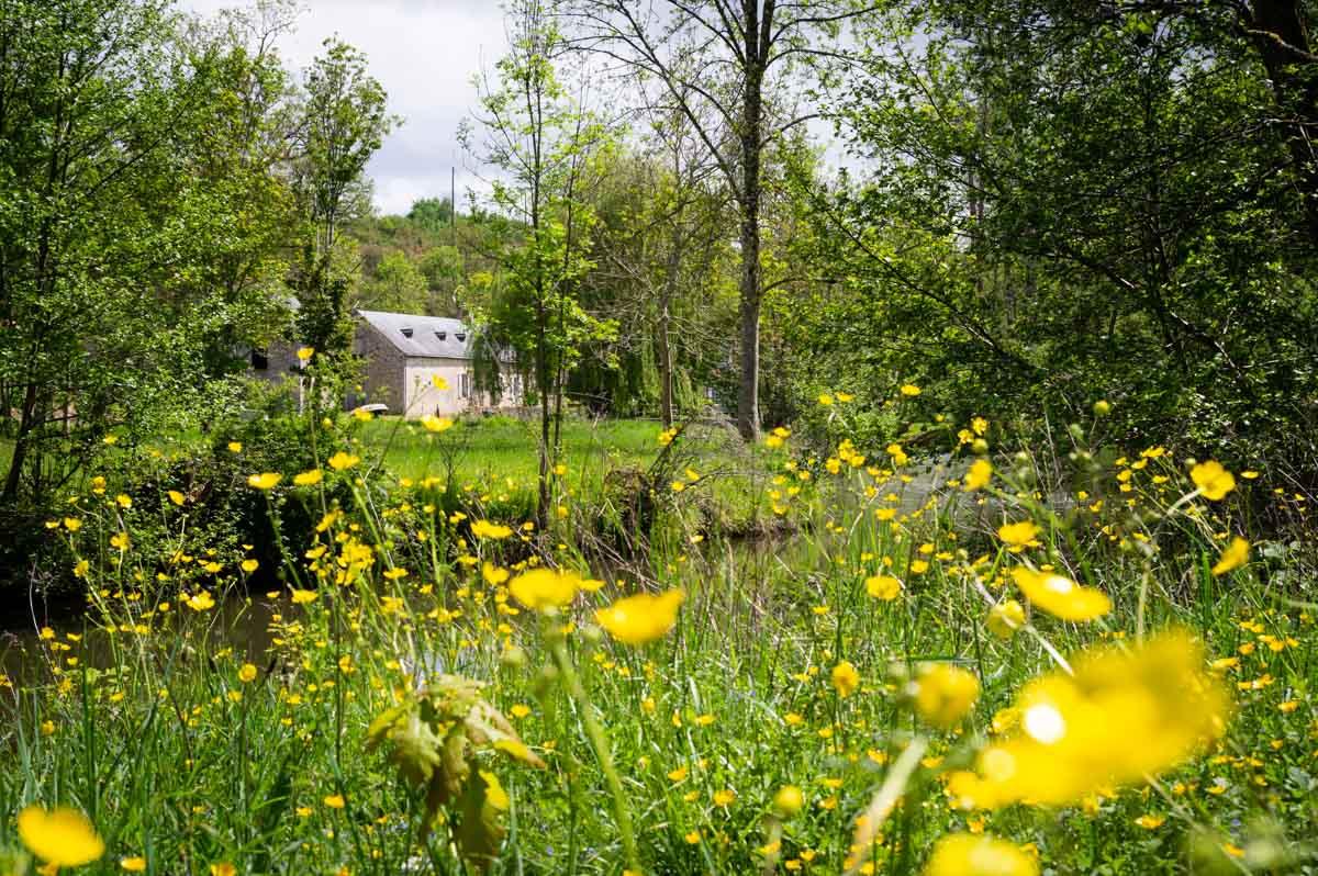 paysage fleuri en Mayenne