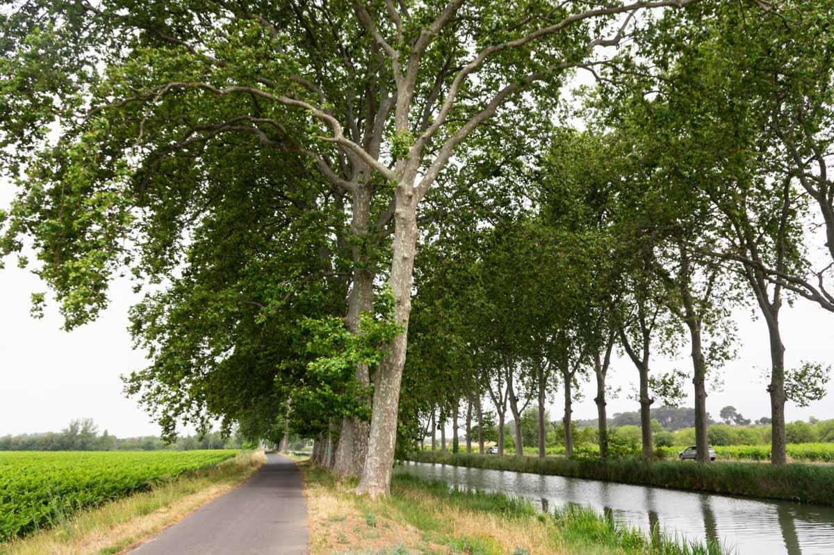 piste cyclable du canal du Midi près de Béziers